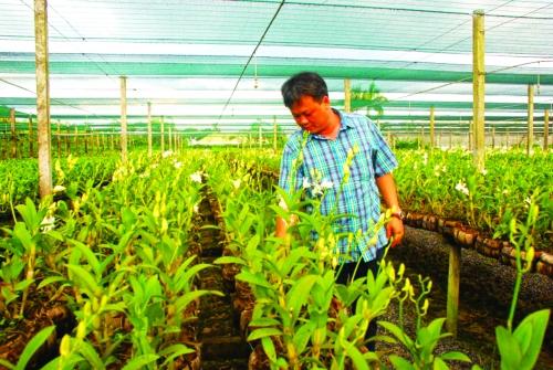 Kết nối để kích hoạt tín dụng nông nghiệp đô thị