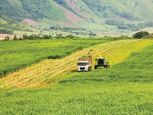 Tích tụ đất đai, phát triển nông nghiệp bền vững
